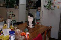 Tablecat1_3_2