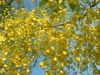 Goldenshower1