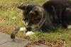 Cat_mouse
