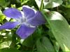 Flower3_2