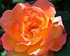 Rose3_2_2