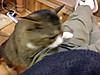 Cat2_4