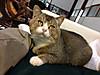 Cat1_2