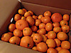 Orange_2