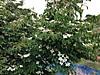Tree1_2