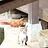 Cat3_2