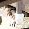 Cat4_2