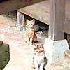 Cat5_2