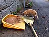 Cats1_3